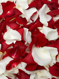 Flower Petals for Wedding