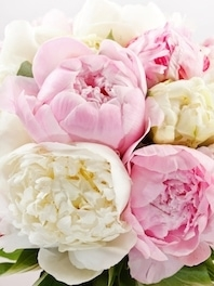 Peonies: July - Aug - Sep