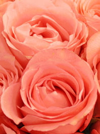 Salmon pink flowers for sale pink flowers flower explosion salmon pink flowers mightylinksfo