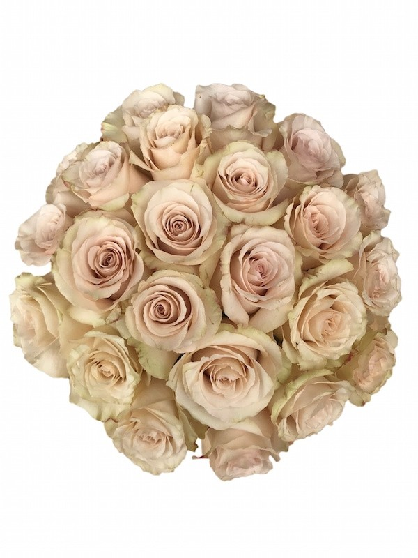 Quicksand Rose Cream Champagne Roses For Sale