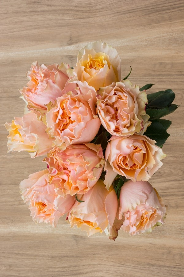 Peach Garden Rose campanella | peach garden rose