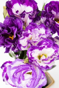 Purple and white flowers white and purple flowers flower explosion purple and white flowers mightylinksfo