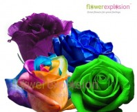 quick view mixed rainbow roses