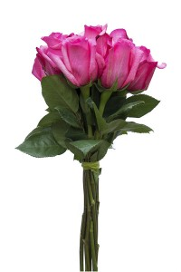 Hot pink flowers for sale cheap hot pink flowers flower explosion shocking versillia hot pink rose mightylinksfo
