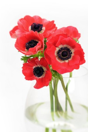 Red Anemones Bouquet