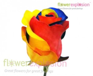 Tricolor Roses | Yellow, Blue, Red