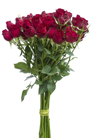 Drak Red Spray Roses