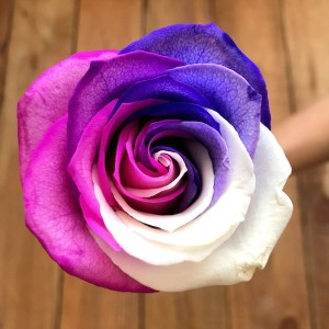 Wholesale Tinted Rose