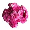 Garden Roses Ashley