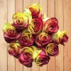 fresh tinted red yellow roses