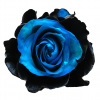 onyx airbrushed rose