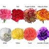 Available Carnations