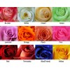 Colors of the Roses