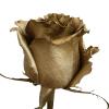 Gold Rose Metallic