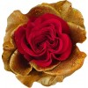 heart of gold rose