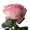 Pink Xpression Garden