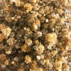 Mocca Brown Baby's Breath