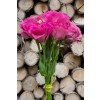 Lisianthus Hot Pink