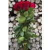 Red Intuition Rose (Exclusive)