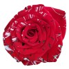 red rose with white and green