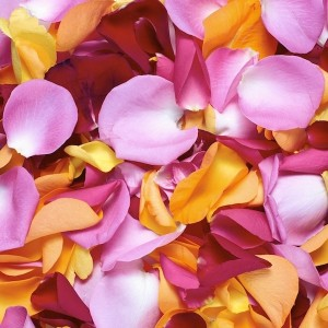 Mixed Rose Petals