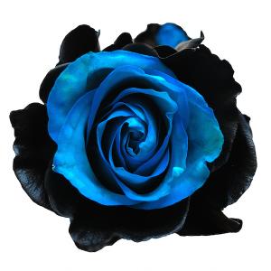 onyx airbrushed rose