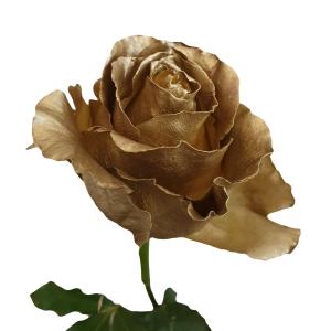 Metallic Gold Roses