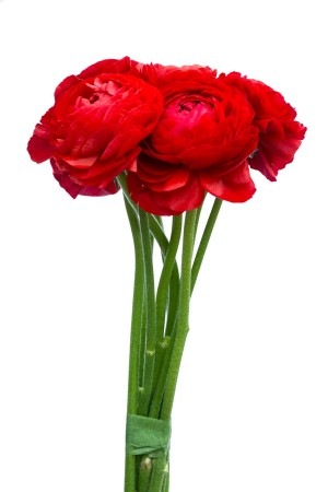 Red Ranunculus Flowers