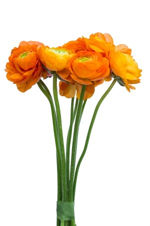 Orange Ranunculus (Flowers)