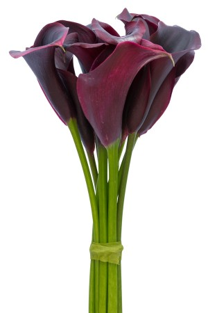 Black Mini Calla