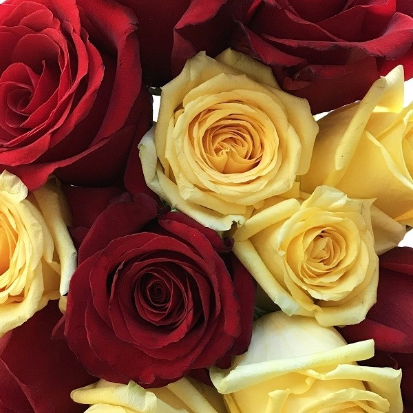 Red and Yellow Roses Combo