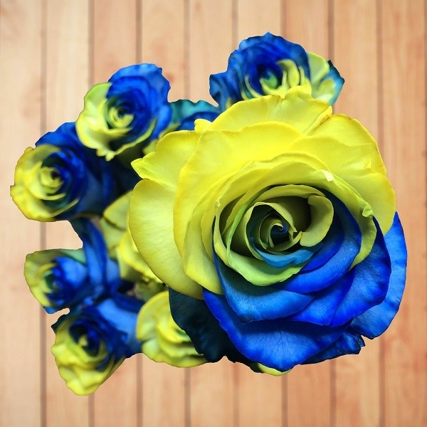 wood blue and yellow rose