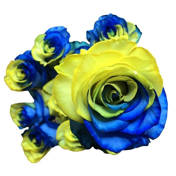 yellow and blue tinted rose