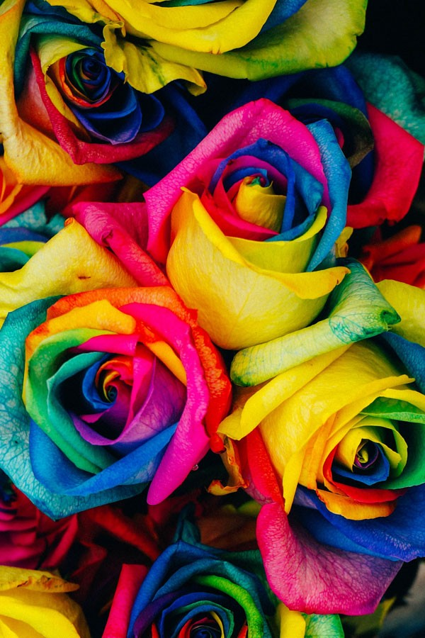 Wholesale roses diy wedding flowers for Where can i buy rainbow roses