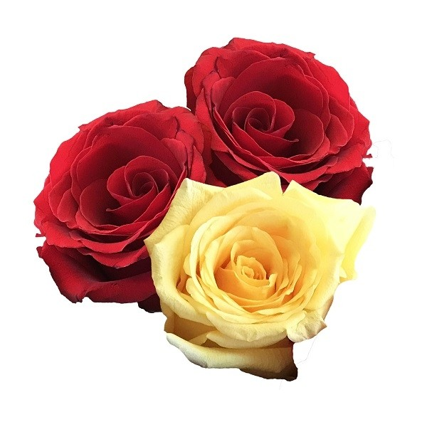Yellow and Red Roses Medley