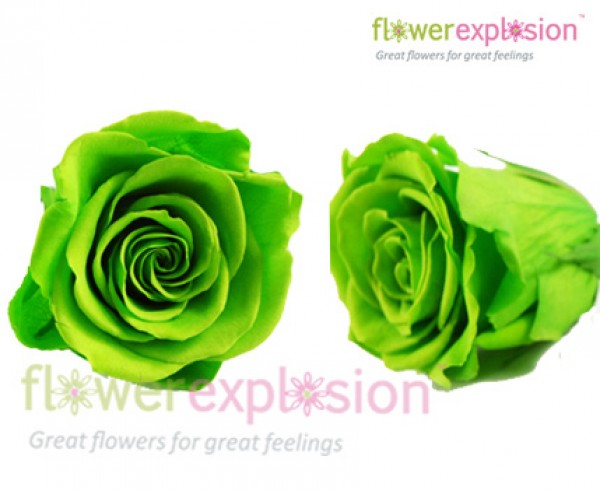Green Preserved Roses