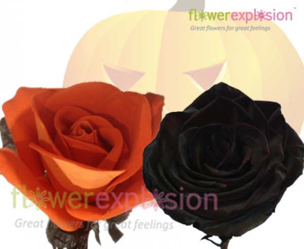 Halloween Orange & Black Tinted Roses