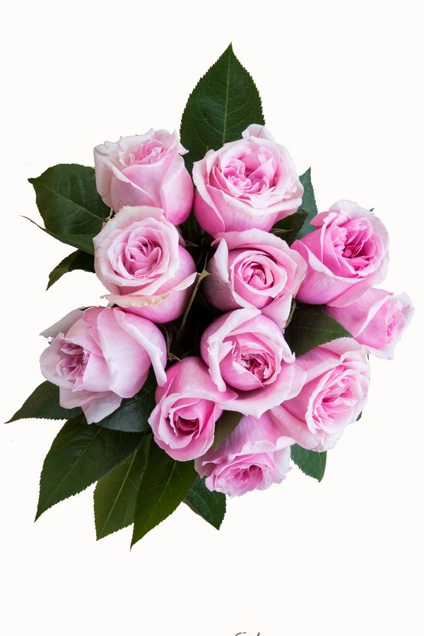 Light Pink Roses - Next Day Delivery