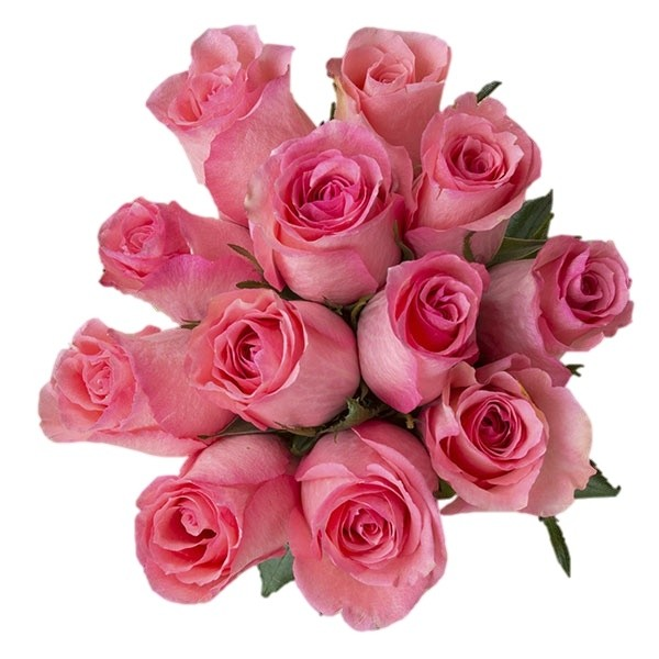 classic light pink vday roses