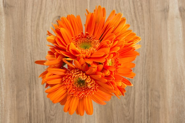 Light Center Orange Daisies