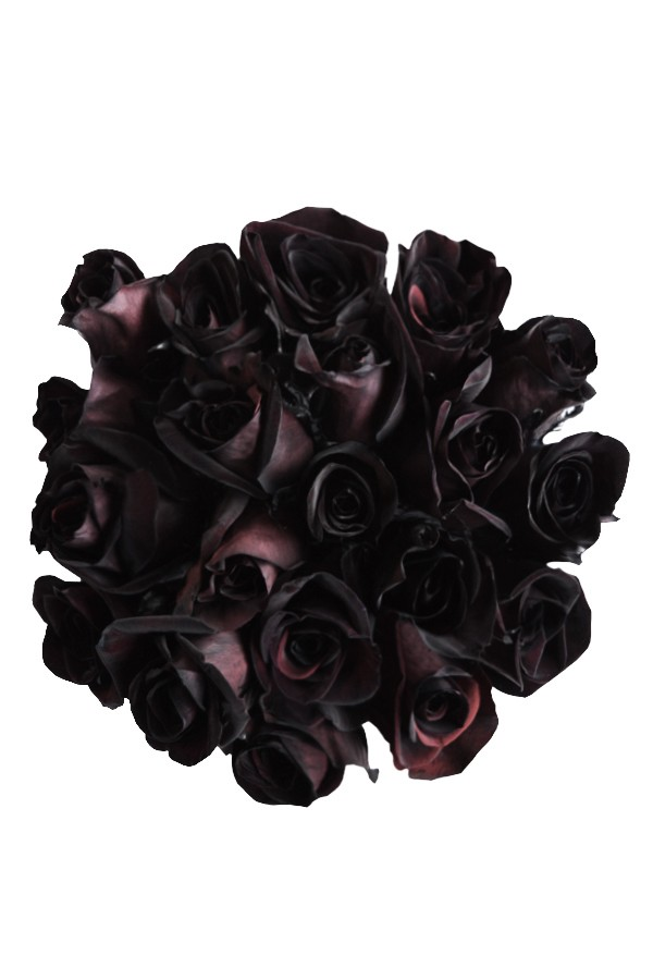 black roses tinted black roses for sale flower explosion
