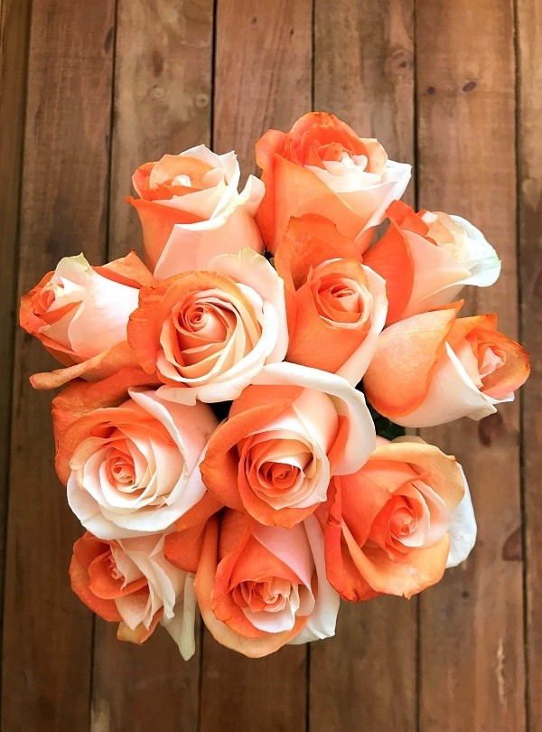 orange and white tinted roses