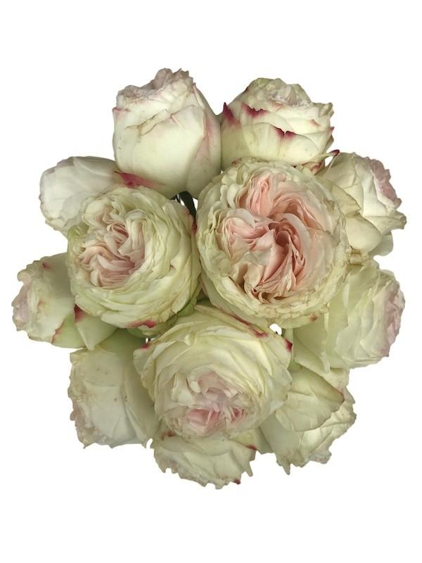 Pink Vintage Wedding Garden Roses