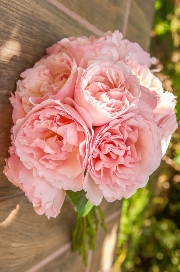 Pink Garden Roses - Like A Virgin