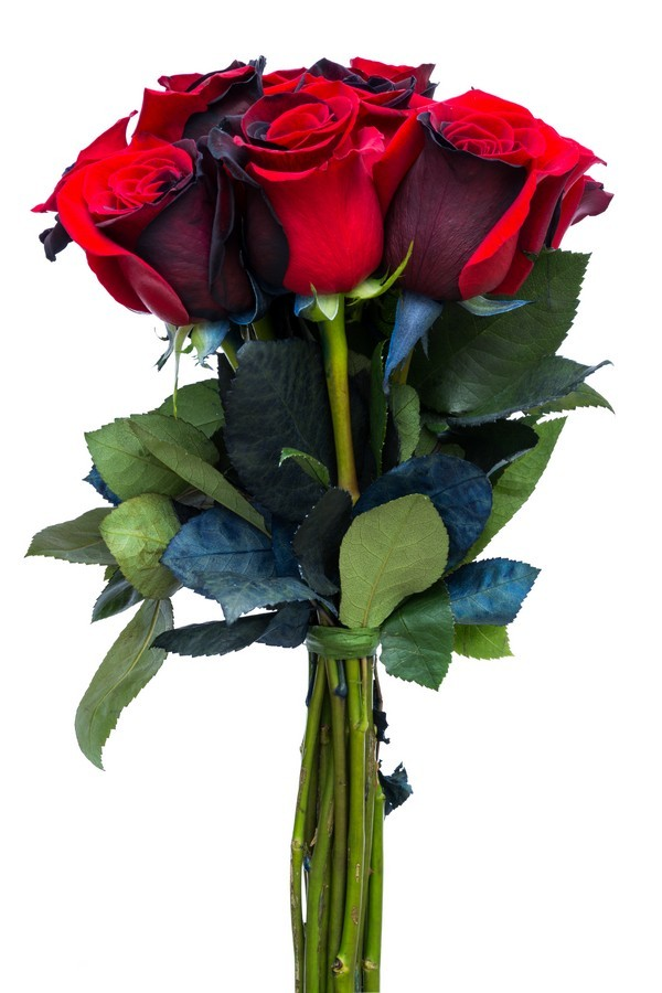 Red and Black Tinted Roses - flowerexplosion.com