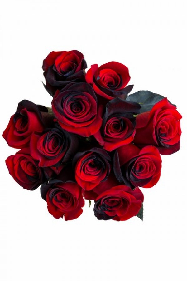 red and black tinted roses flowerexplosioncom - Red Garden Rose Bouquet