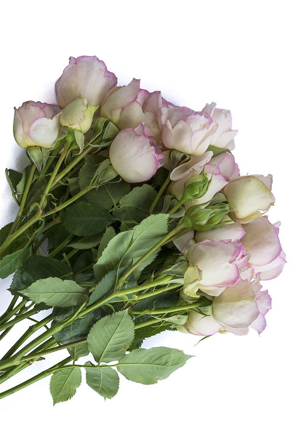 Cream & Light Pink Spray Roses