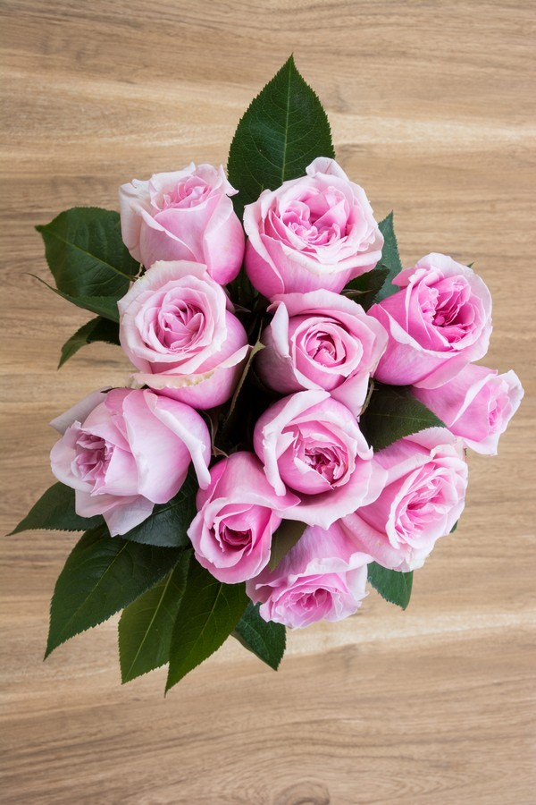 Titanic Light Pink Rose