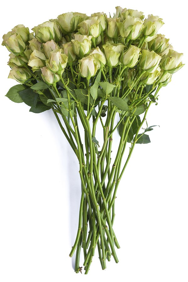 Green Spray Roses - flowerexplosion.com