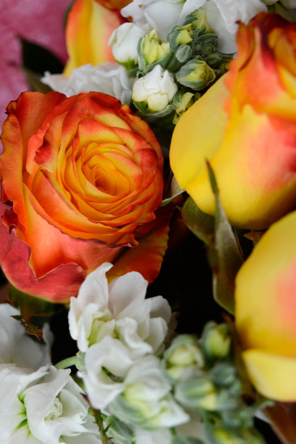Fire & Ice, Red & Yellow Rose Bouquet